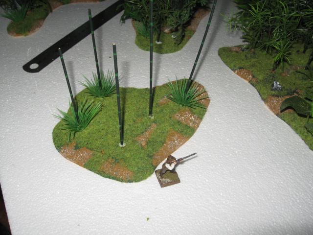 VENDU végétation luxuriante 1 Img_0353-50304b3