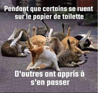 Chats alors !!! - Page 2 Pq-572df26
