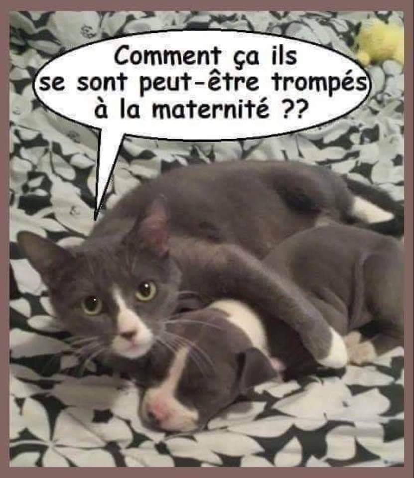 Chats alors !!! - Page 2 Chat-chien2-56f6f2c