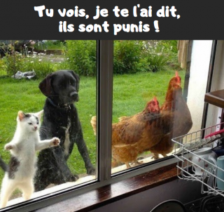 Tous les humours  - Page 14 Punis-5746f01