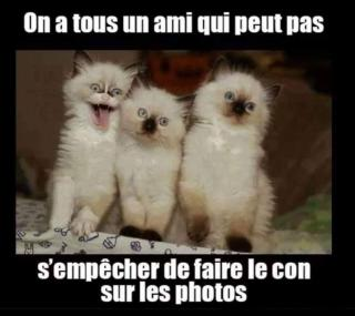 Chats alors !!! - Page 3 Chat-photo-5767bbd