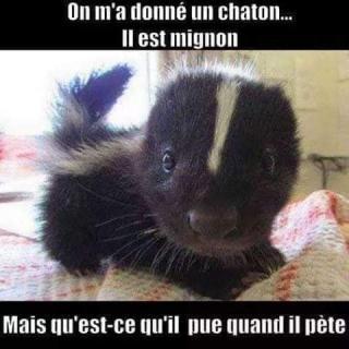 Chats alors !!! Chaton-56fa004