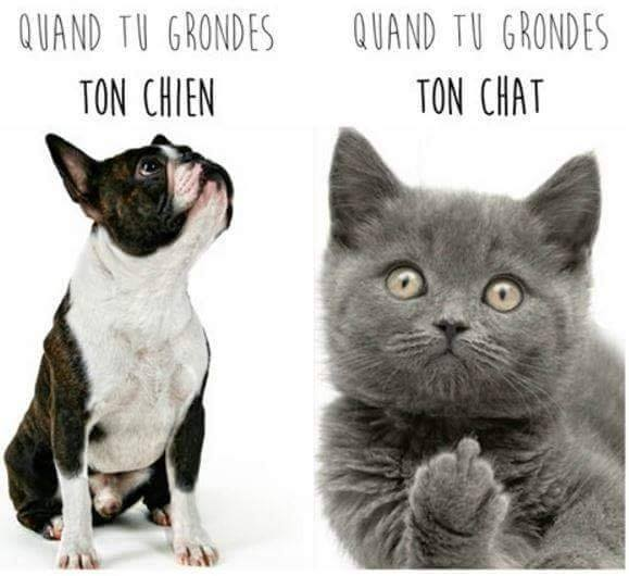 Chats alors !!! - Page 2 Chat-chien-56f6f20