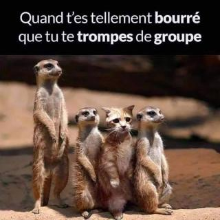 Chats alors !!! - Page 3 Groupe-5767bbb
