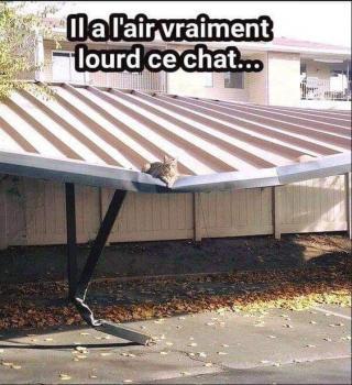 Chats alors !!! Chat-56f9ffe