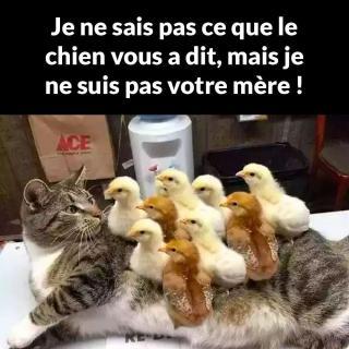 Chats alors !!! Poussins-chat-56f8898