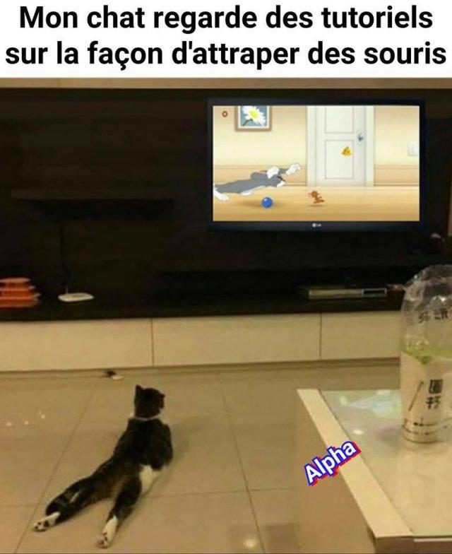 Chats alors !!! - Page 3 Tuto-chat-575e9c6