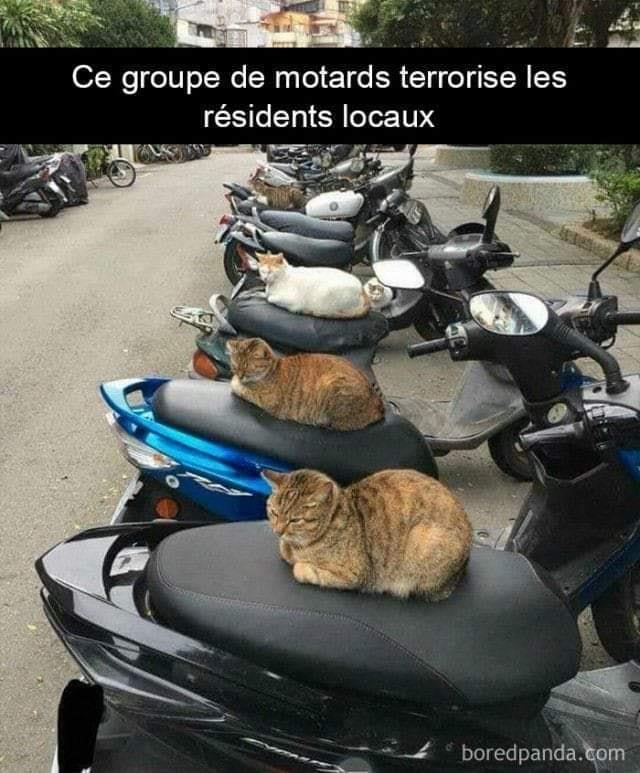 Chats alors !!! Motards-56f7f1f