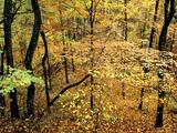 Wallpaperi Th_13593_Autumn_Forest1_Percy_Warner_Park8_Nashville1_Tennessee_122_753lo