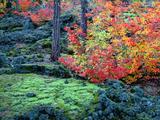 Wallpaperi Th_14537_McKenzie_Lava_Fields4_Willamette_National_Forest4_Oregon_122_739lo