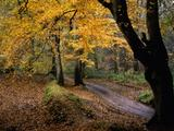 Wallpaperi Th_14859_The_Road_Less_Traveled_122_1150lo