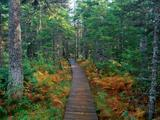 Wallpaperi Th_14504_Fundy_National_Park6_New_Brunswick_122_591lo