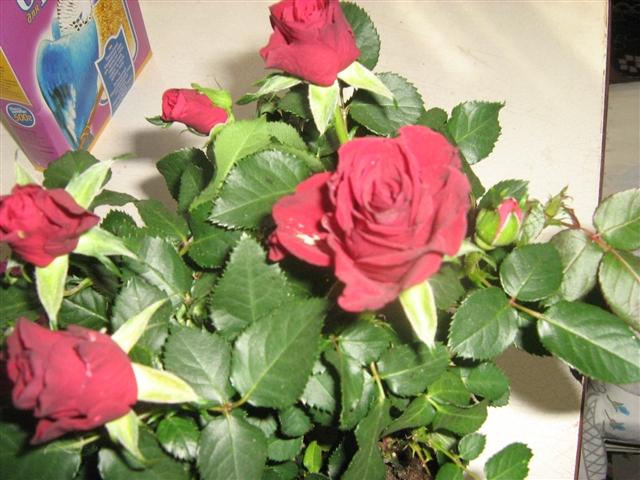 """Мои цветочки ... Занятие для души)))""""  D1a0a08181bd4d9f8f73f1410796013f_big"""