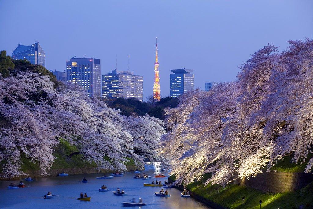 السياحة في طوكيو لذكريات تصمد طويلاً في الذاكرة 501793611