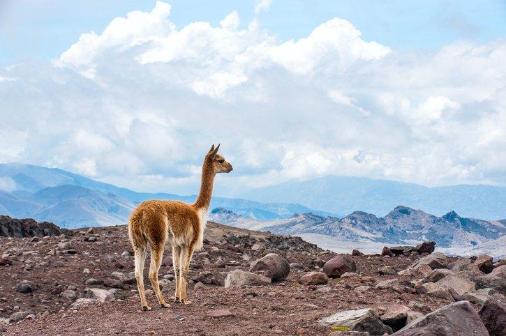 زيارة الى الإكوادور أرض المغامرات 1866462978