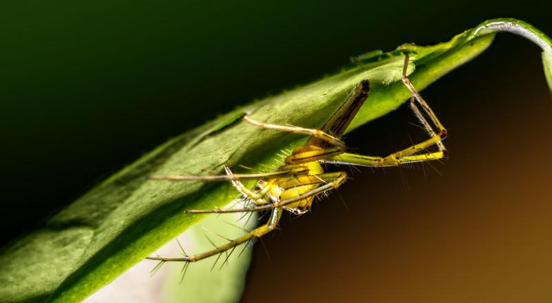 سم الحشرات يعالج الصدفية Bb0ThinkstockPhotos-843226234