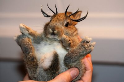 - Page 2 Baby_jackalope.htm_(1)