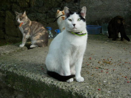Ces chats qui ressemblent à Hitler Cat-that-looks-like-hitler-5-4dbf5b