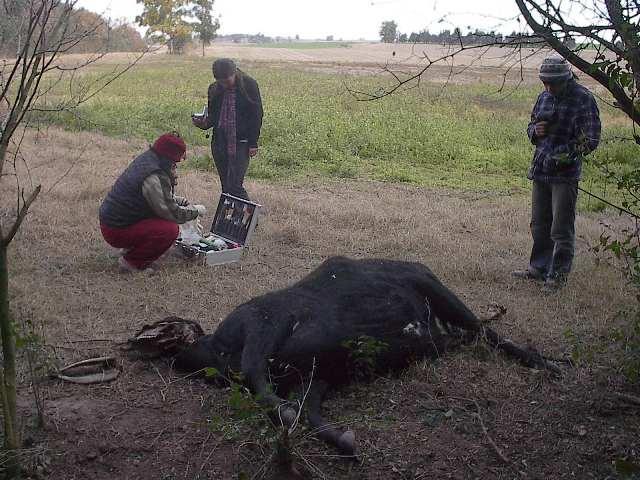 Argentine: Les cas de mutilations à la hausse Quebrachito-08-08-09-ar--01b-11e3fb8