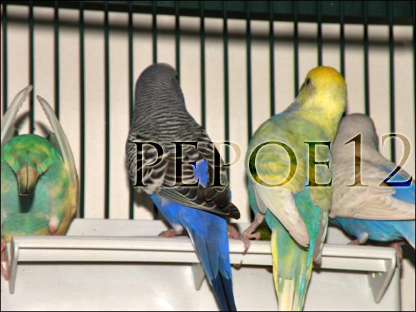 La bande des 4 ! - Page 2 Dscn0779-b0607d