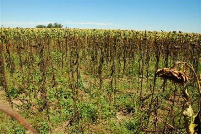 Crop Circle 2010 Argentine-01e-1a50587
