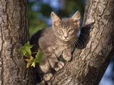 Mačke (hrana za mačke, najdraža pasmina mačaka, držanje mačke, kastriranje, slike mačaka..) Th_28221_Perched5_Gray_Domestic_Shorthair_122_10lo