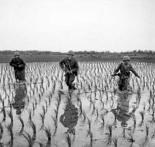 scènes de combat Dans-les-rizi-res-477bb7