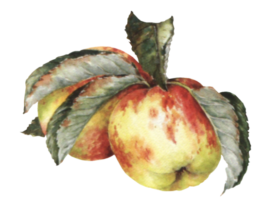 Voće i povrće Vwzil6d86ns