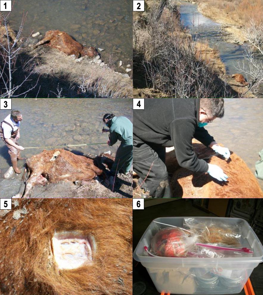 Encore des cas de mutilation animale. Weston-usa-14-mars-2009-16cfd1b