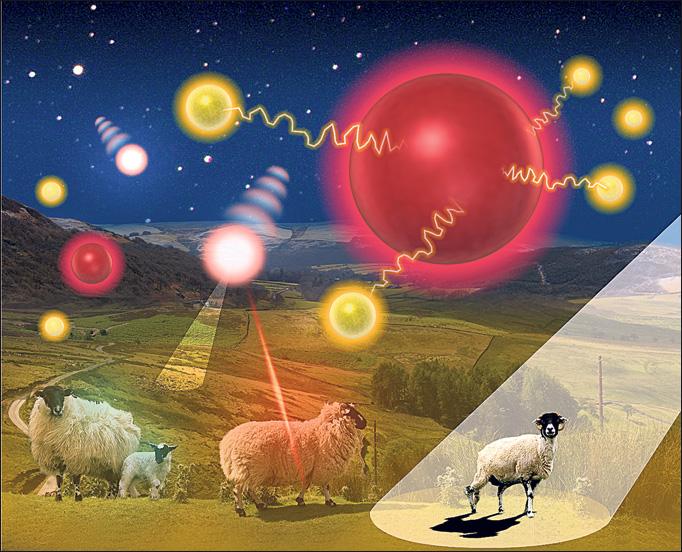 Mutilation de moutons à Shrewsbury Mute-moutons-gb1-1ab375d