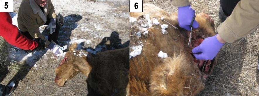 Encore des cas de mutilation animale. Aaron-12-d-c-2009--03-16beafc