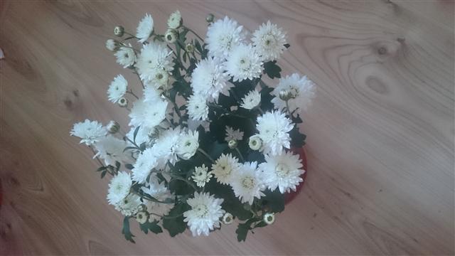 """Мои цветочки ... Занятие для души)))""""  90c51f15f60546638a475110e1ec0c94_big"""