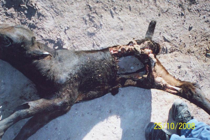 Argentine: Les cas de mutilations à la hausse Mute-01a-11022ff
