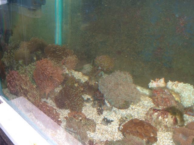 vends coraux durs Croraux-001-6d5f35