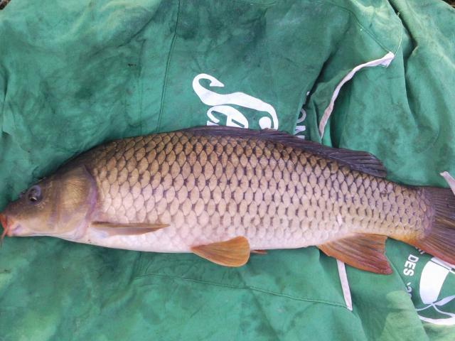 Pêche en haute vienne, la bénéchie ( cussac, chalut) Photo0057-121f8bb