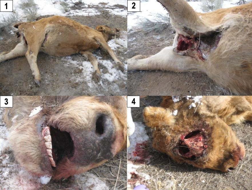 Encore des cas de mutilation animale. Aaron-12-d-c-2009--02-16beade