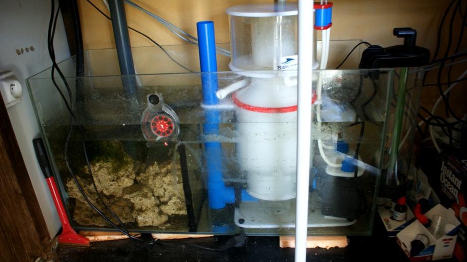 Aquarium d'eau de mer : 450 L Dsc08524-1fedcbf