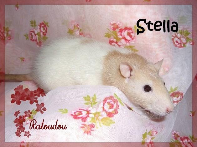 Stella xXx Yuki Dscf2620-1950749