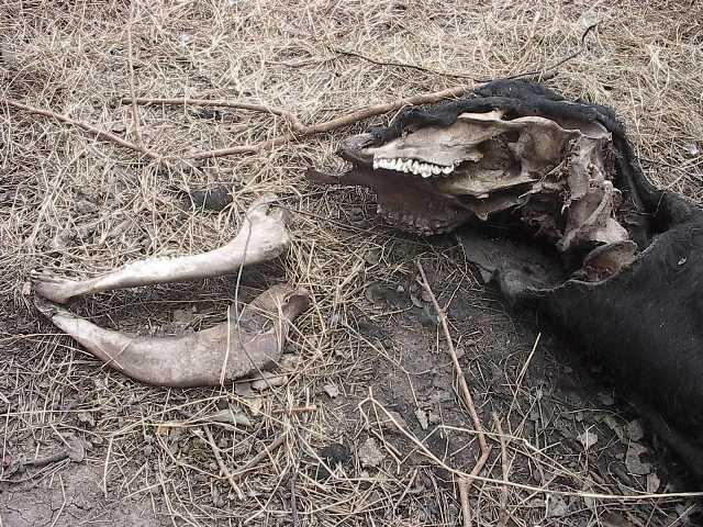 Argentine: Les cas de mutilations à la hausse Quebrachito-08-08-09-ar--01c-11e3fe0