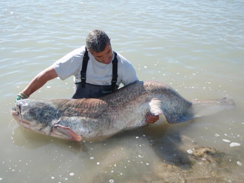 coup du soir avec 6m81 de poissons P5210029-1c669a8