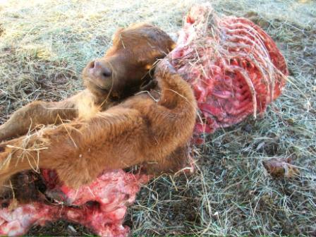 Encore des cas de mutilation animale. Mut-02-15d2ee6