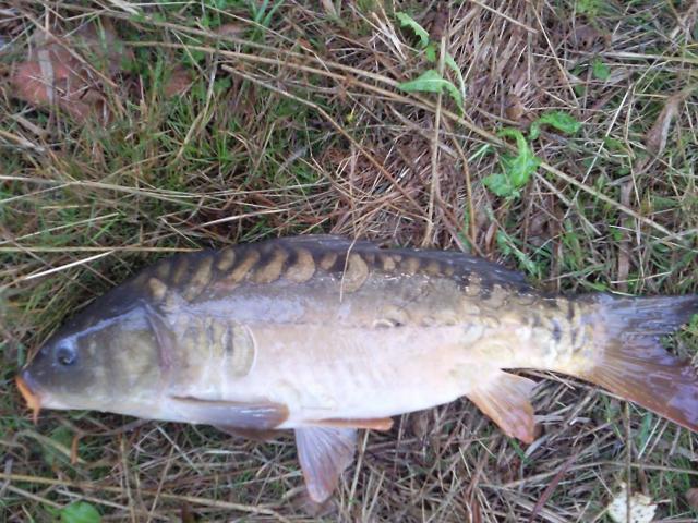 Pêche en haute vienne, la bénéchie ( cussac, chalut) Photo0053-121f8d6