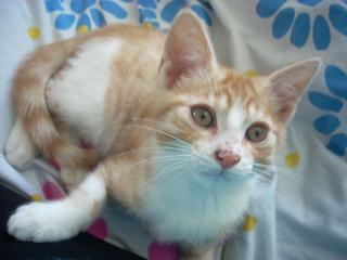 Mon nouveau chat - Page 4 Photo-121-1e66305