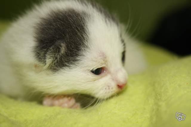 Mon nouveau chat 5641359202-1cc8583