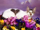 Mačke (hrana za mačke, najdraža pasmina mačaka, držanje mačke, kastriranje, slike mačaka..) Th_27706_Love_Cat_122_234lo
