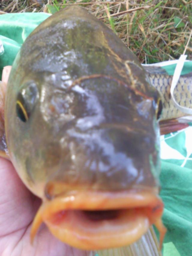 Pêche en haute vienne, la bénéchie ( cussac, chalut) Photo0058-121f91e