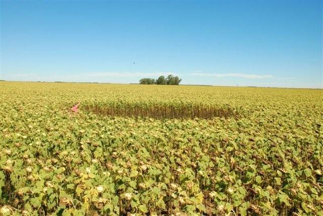 Crop Circle 2010 Argentine-01-1a50576