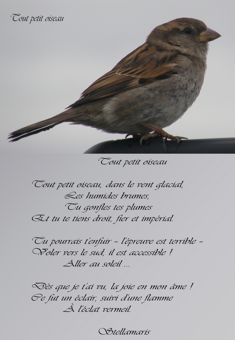 Les oiseaux : la passion de Marylou - Page 3 Tout-petit-oiseau-abb610