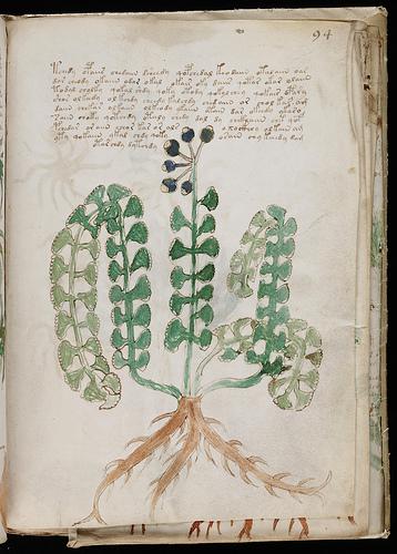 El Manuscrito Voynich - Realidad o Engano? 463571684_a4f421c54d-1ec4d84