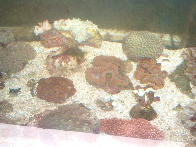vends coraux durs Croraux-004-6d5f87